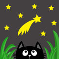 Black cat looking up to comet with stars in the dark night. Green grass dew drop.