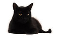 Black cat looking at you Royalty Free Stock Photo