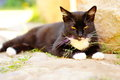 Black cat lying down to rest on a warm day Royalty Free Stock Photos