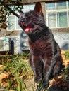 Negro gato 3