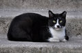 Black cat lying on the porch and white a concrete step Royalty Free Stock Images
