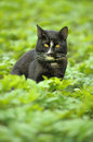 Black cat in the middle of the green lawnrn Stock Photos