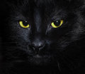 Black cat muzzle a in the dark Royalty Free Stock Images