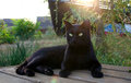 Black cat outdoors with yellow eyes starring at the photographer Stock Image