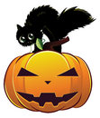 Black cat on pumpkin a cute kitten big halloween Royalty Free Stock Photography