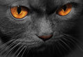 Black cat with red eyes on the background Stock Photography