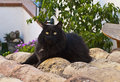 Black cat in the roof a with yellow eyes Stock Photo