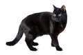 Black cat with a scared look  on white Royalty Free Stock Photo