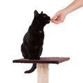 Black cat with a scratch pole isolated on white Royalty Free Stock Photography