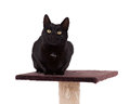 Black cat with a scratch pole isolated on white Royalty Free Stock Image