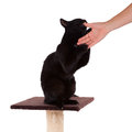 Black cat with a scratch pole isolated on white Royalty Free Stock Photos