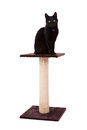 Black cat with a scratch pole isolated on white Royalty Free Stock Photo