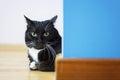 Black cat sitting around the corner Royalty Free Stock Photo