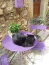 Black cat on table near stone wall Stock Image
