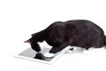 Black cat touch tablet computer Stock Image