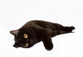 Black cat on white background Royalty Free Stock Photo