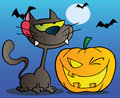 Black cat and winking halloween pumpkin Stock Images
