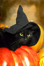 Black cat witch a wears a s hat Royalty Free Stock Photos