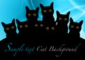 Black cats Stock Photography