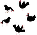 Black chicken. Royalty Free Stock Photo