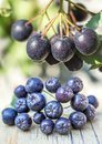 Black choke berry a closeup of the berries Royalty Free Stock Image