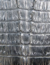 Black crocodile leather texture closeup background