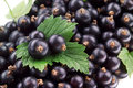 Black currant berries with a leaves Royalty Free Stock Photography