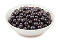 Black currant bowl on white background Stock Image
