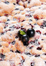 Black currant cake Stock Image