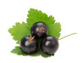 Black currant isolated on the white background Royalty Free Stock Photo