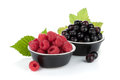 Black currant and raspberry Royalty Free Stock Images