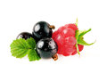 Black currant with raspberry Royalty Free Stock Photo