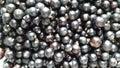 Black Currant - Summer Harvest