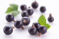 Black currant on white Stock Photo
