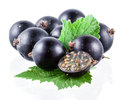 Black currant on white isolated background Stock Photos