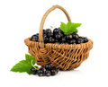 Black currant in a wicker basket Royalty Free Stock Photo