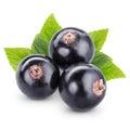 Black currants Royalty Free Stock Photo