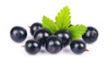Black currants Royalty Free Stock Photo