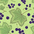 Black currants seamless pattern. Stock Photos