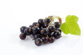 Black currants, white background Royalty Free Stock Photo