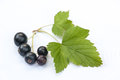 Black currants on white with leaf and natural shadow Stock Photography