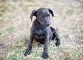 Black dog on a meadow Stock Photos