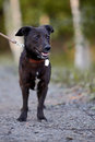 Black doggie small not purebred dog on walk the not purebred mongrel Stock Photo