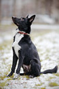 Black doggie on walk dog snow not purebred dog the large not purebred mongrel Stock Images