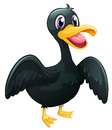 A black duck illustration of on white background Stock Images