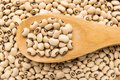 Black Eyed Pea legume. Grains in wooden spoon. Close up. Royalty Free Stock Photo