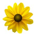 Black Eyed Susan (Rudbeckia Hirta) flower Royalty Free Stock Photo