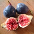 Ripe black figs Royalty Free Stock Photo