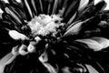 Black flower macro shot background close up Stock Photos