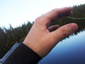Black fly on fishermans hand lots of Royalty Free Stock Photos